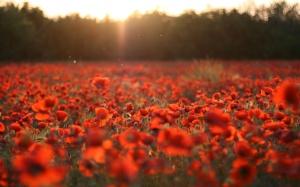remembrance-sunday-1